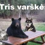 tris-varskes